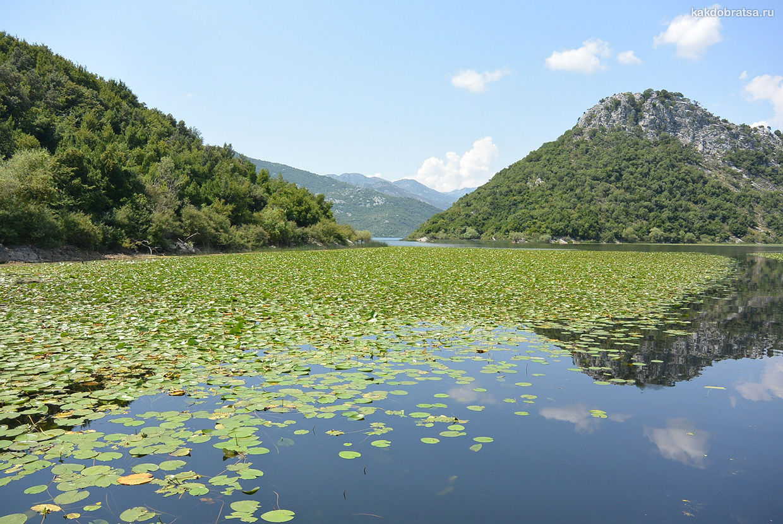 Скадарское озеро достопримечательности Черногории