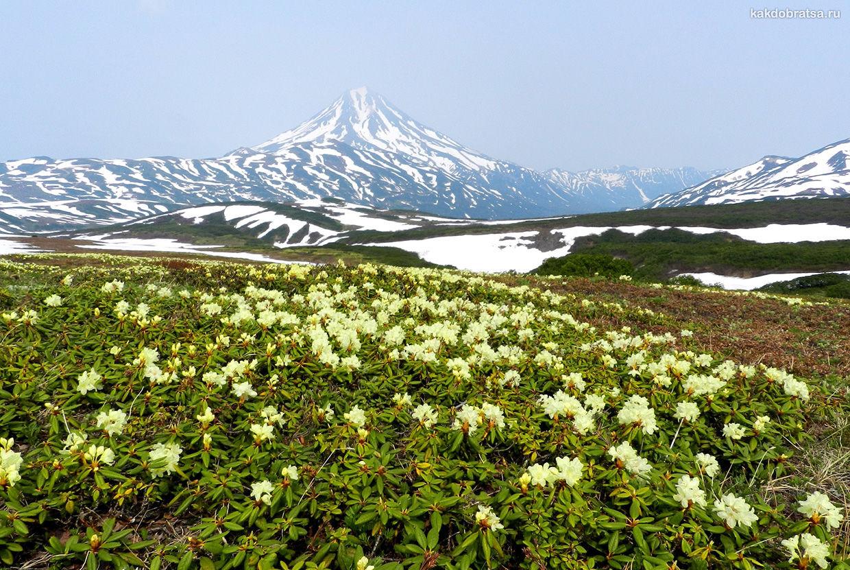 Весна на Камчатке
