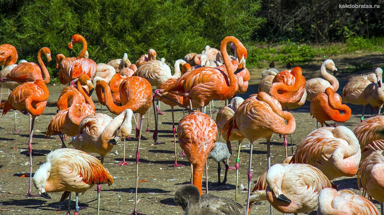 Как добраться до Зоопарка в Праге