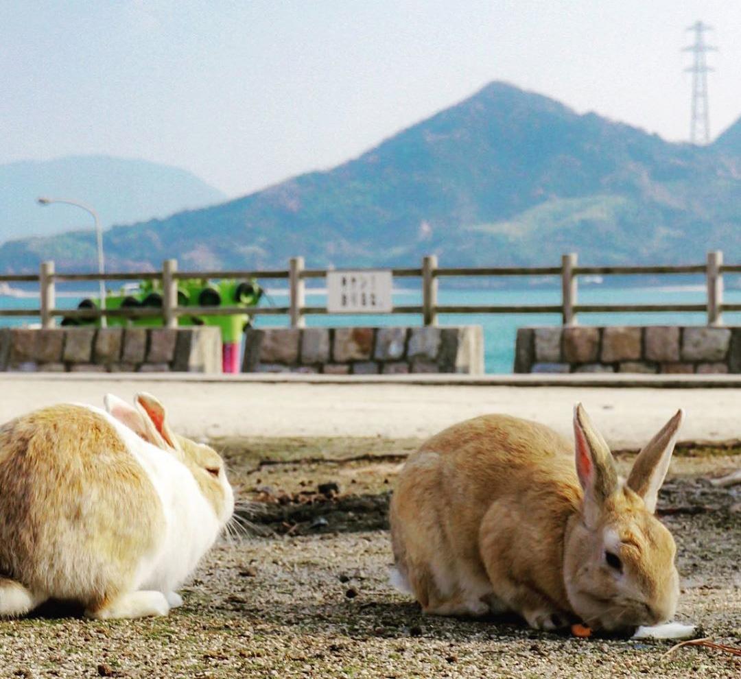 Пляж с кроликами в Окуносиме, Япония