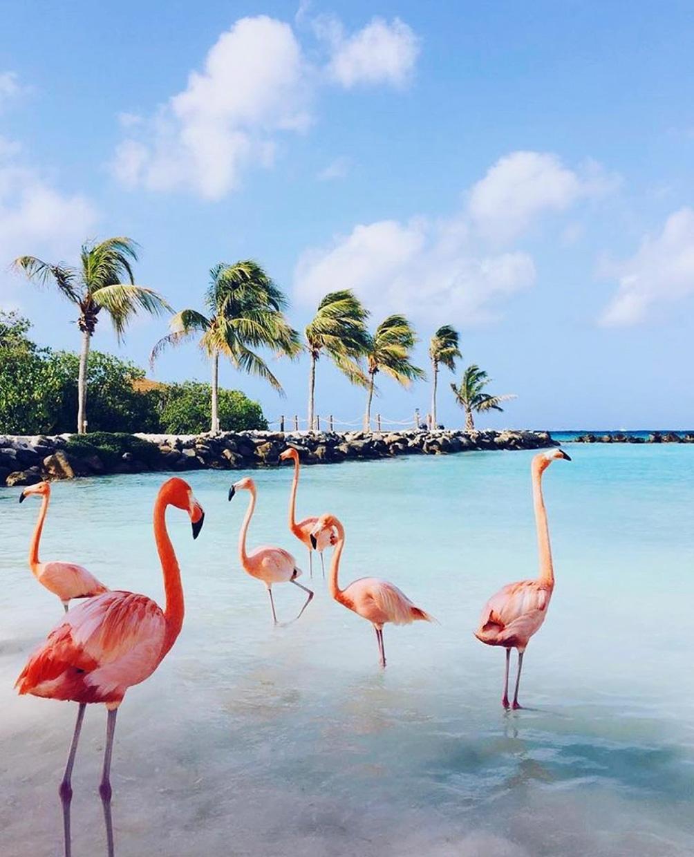Красивый пляж с фламинго на Арубе