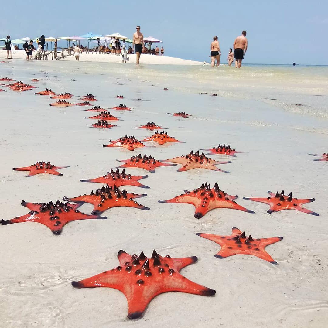 Пляж с морскими звездами на острове Фукуок