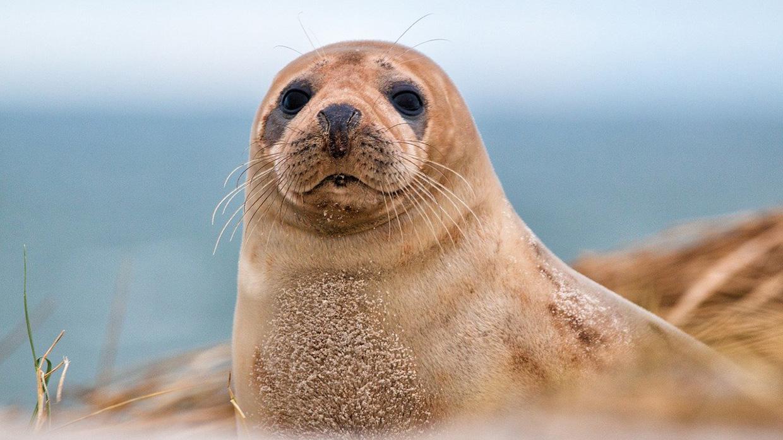 Пляжи с животными для селфи и красивых инстаграм фото