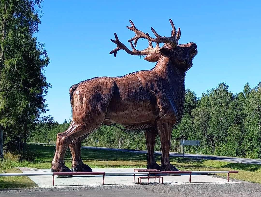 Карельский зоопарк дорога из Сортавала