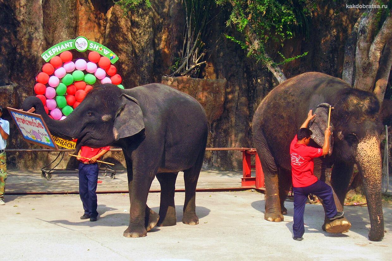Сирача шоу слонов в Таиланде