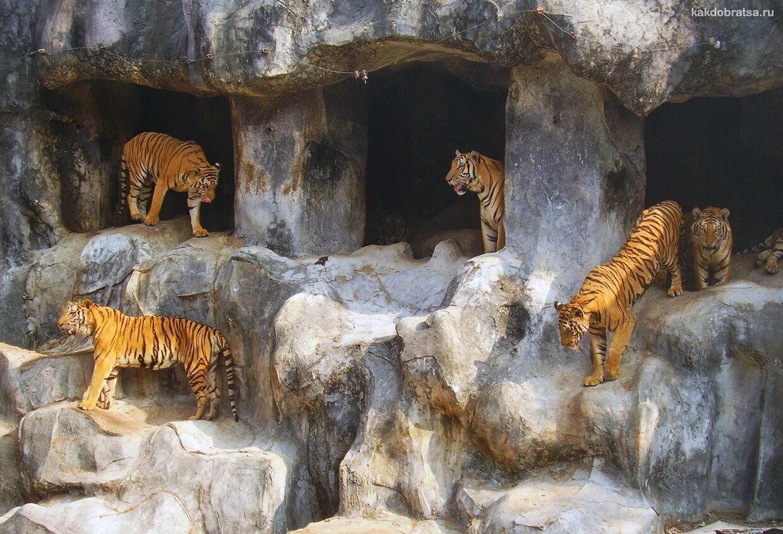 Зоопарк с тиграми в Таиланде экскурсия и стоимость