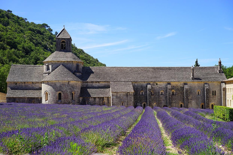 Лавандовые поля в Провансе, Франция