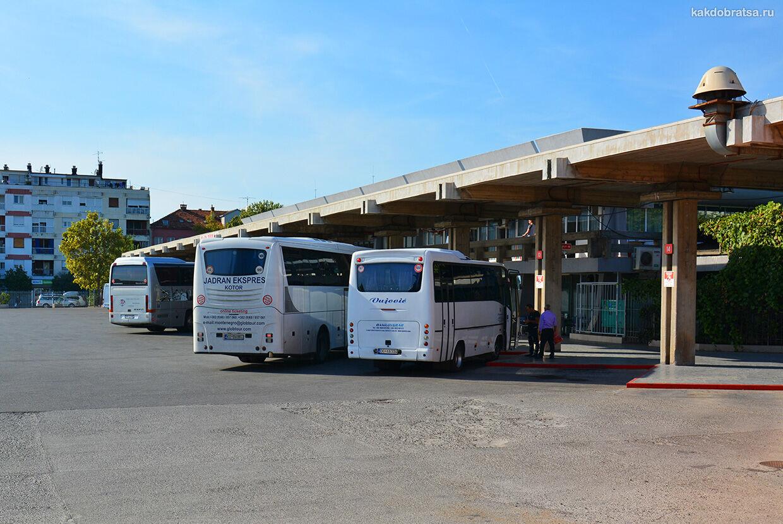 Автобус из Будвы в Подгорицу