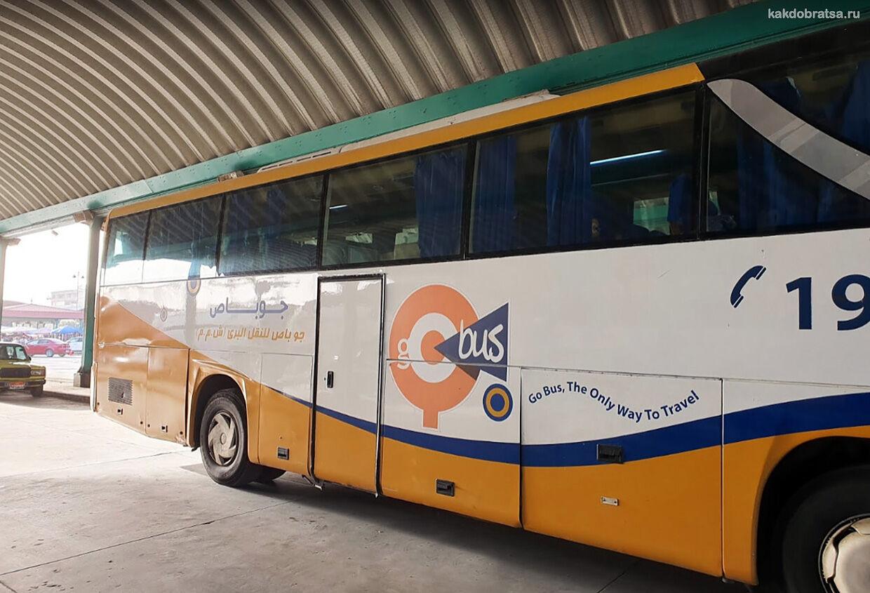 Автобус из Каира в Александрию