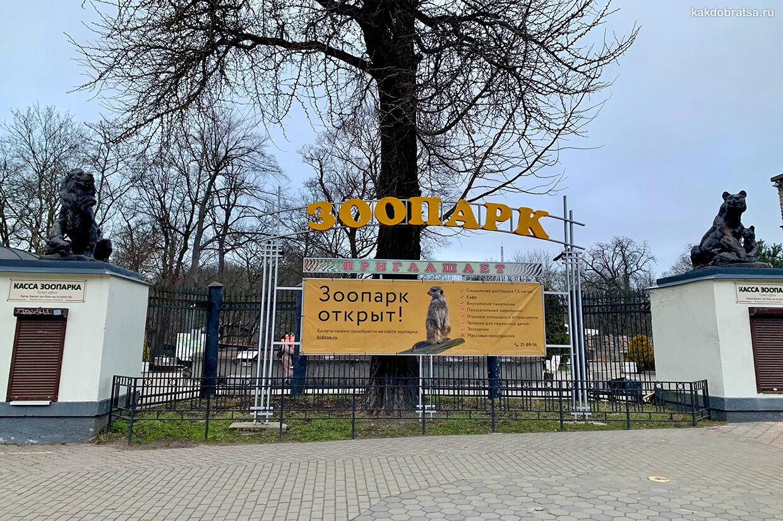 Калининградский зоопарк как добраться на городском автобусе
