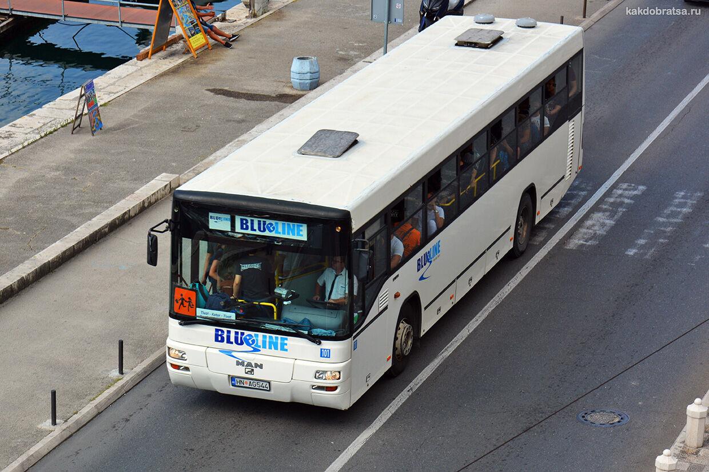 Автобус из Тивата в Котор, Будву, Бар, Подгорицу