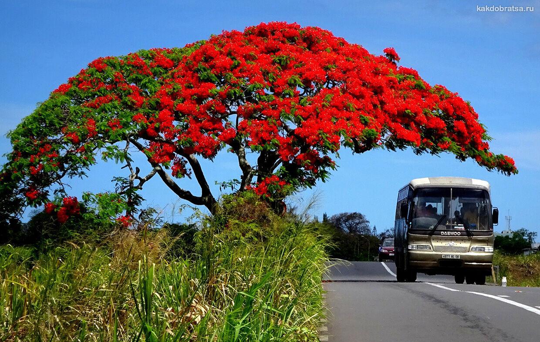 Купить экскурсии на острове Маврикий