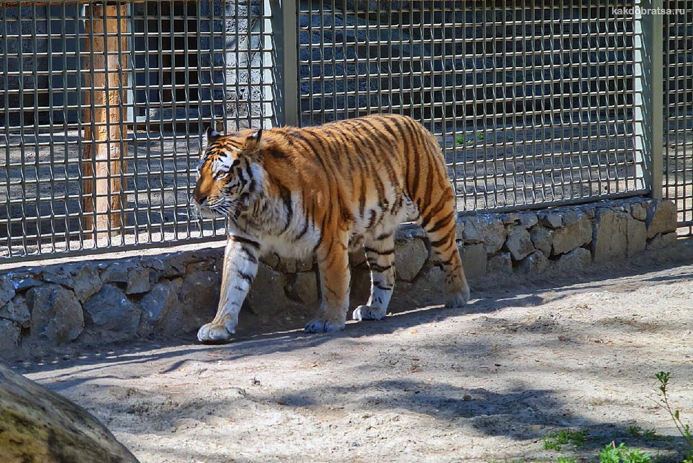 Новосибирский зоопарк какие животные, чем заняться и что посмотреть