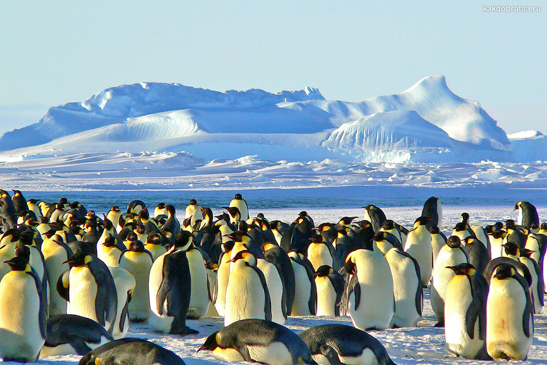 Туры на Антарктиду